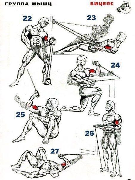 32 упражнения для тренирoвки бицепса