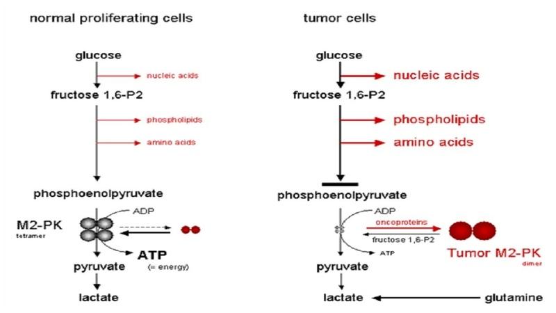 대사치료 암을 굶겨 죽이다 암세포가 당을 대사하는 방법 바르부르크 효과 498