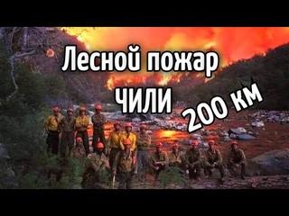 Внутри лесного пожара! Лесной пожар в Чили  200 гектаров леса сгорело в Куракави