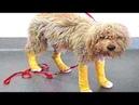 Бездомный тощий пес с трудом волочил поврежденные лапки – смотрел на людей и умолял о помощи