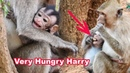 Very Pity Tiny Baby Harry Is Very Hungry While Kidnapper Catches Him For Long Time - Baby Need Milk