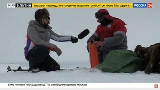 Снегоходы STELS приняли участие в комплексной экспедиции РГО на архипелаге Земля Франца Иосифа.