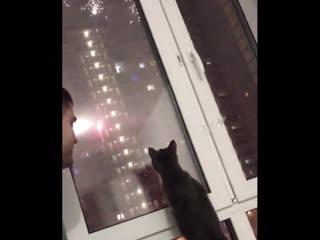 У меня кот боится прячется!😂