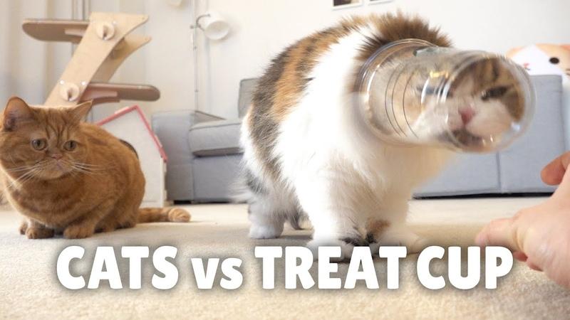 Cats vs Treat Cup