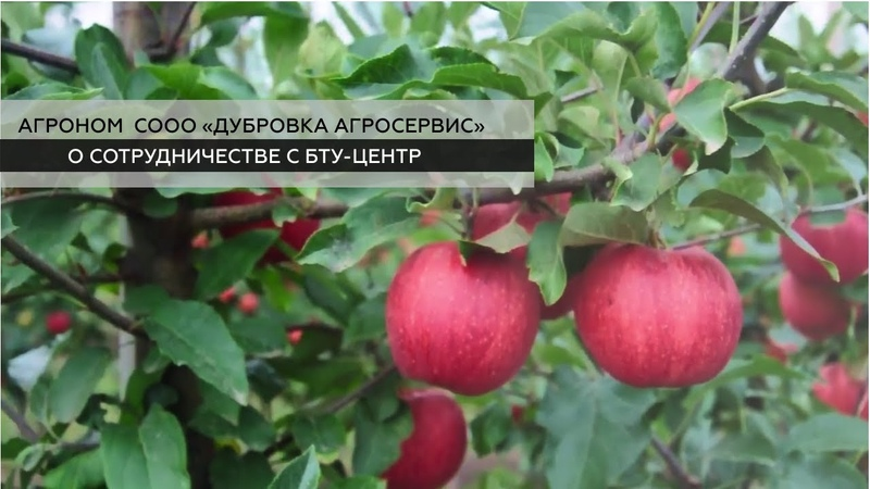 Агроном СООО Дубровка Агросервис о сотрудничестве с БТУ ЦЕНТР