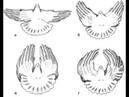 Николаевские голуби и их способы полёта