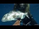 Pescasub agguati ed aspetti profondi del 03 Novembre 2013