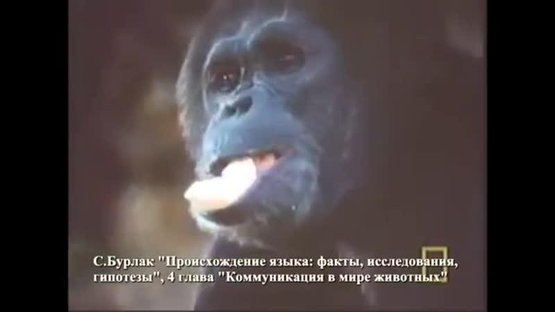 И сотворил Бог животных по Своему образу