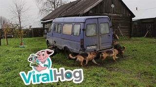 How to Clone Your Doggo || ViralHog