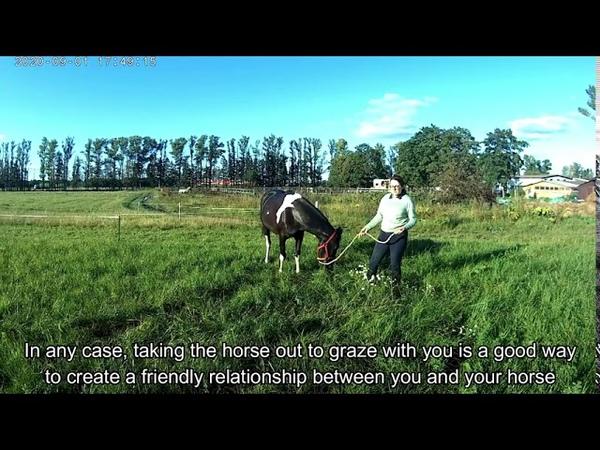 Уроки для начинающих Уход за лошадью Урок 2 Lessons for beginners Horse care grooming Lesson 2