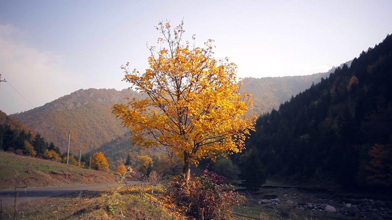 Sakire Tadzrisi