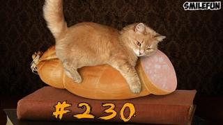 Смешные коты и котики, приколы про котов до слез – Смешные кошки  2019 – Funny Cats