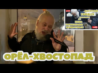 Дмитрий Гайдук - ОРЁЛ-ХВОСТОПАД