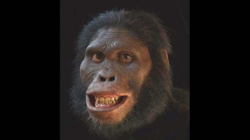 Происхождение человека Эволюция