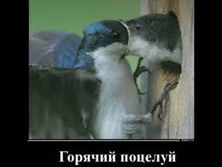 СТРАСТНЫЙ ПОЦЕЛУЙ и Горячий поцелуй
