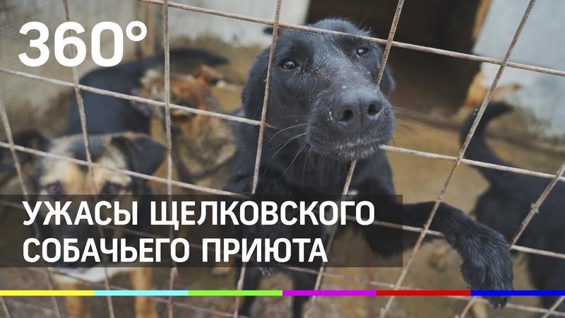 Не все псы попадают в рай Ужасы Щелковского собачьего приюта