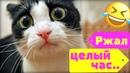 Смешные видео про котов и кошек! Смешные видео! Приколы про котов! Выпуск №7