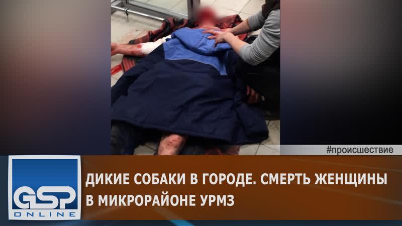 Дикие собаки в городе Смерть женщины в микрорайоне УРМЗ 18 декабря'20