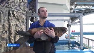 Первый морской котик родился в Приморском океанариуме