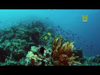 «Большой Барьерный риф: Живое сокровище (4). Коралловое море» (Познавательный, природа, животные, 2020)