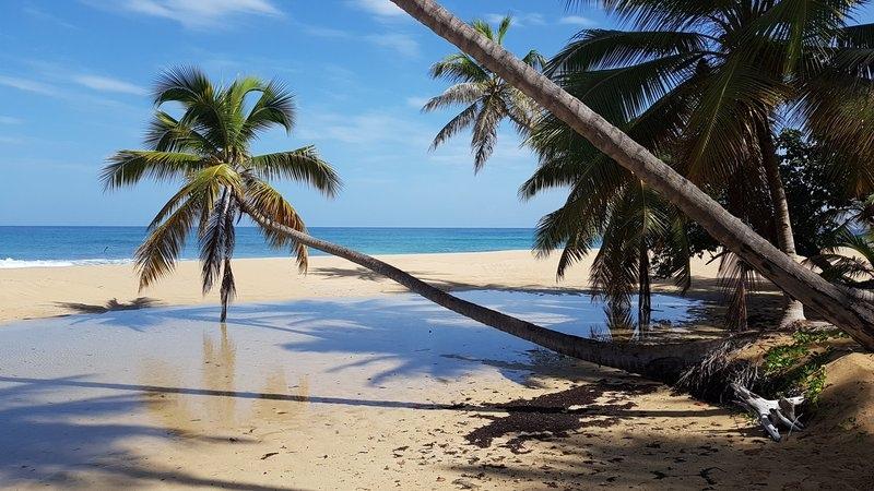 Доминикана, жемчужина Карибского бассейна, изображение №12