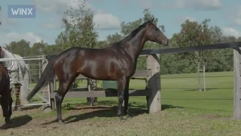 Champion Australian mare Winx is in foal to I Am Invincible. - - Do you have any suggestions for a name - - @winx_horse - -