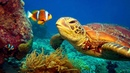 11 HOURS Stunning 4K Underwater footage Music Nature Relaxation™ Rare Colorful Sea Life Video