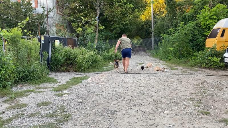 Бигль 6 месяцев Лёня Дрессировка с котами