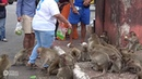 Monkeys Attacking People Overrun Thai City