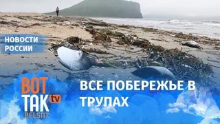 В Приморском крае массово гибнут птицы
