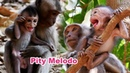 Pity Small Baby Melodo Is Very Hungry When Kidnapper Caught For Long Time - Adorable Wildlife 2020