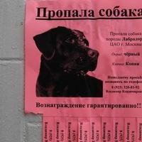 Потеряна/найдена  кошка/собака Лозовая.