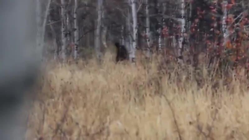 17 РЕЙК, СНЕЖНЫЙ ЧЕЛОВЕК и другие загадочные существа снятые на видео