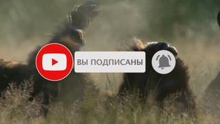 Мир Животных YouTube Канал!