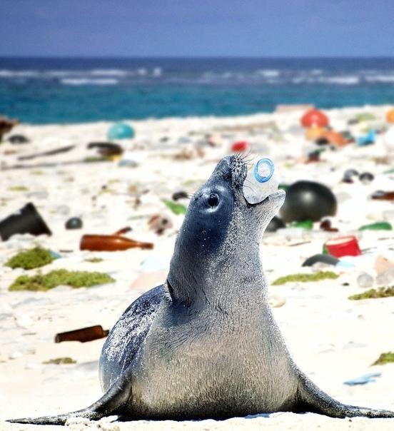 Пластик в океане убивает жизнь.