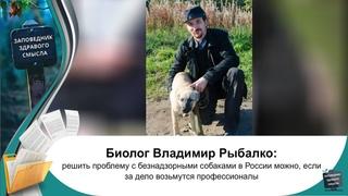 Владимир Рыбалко - как решить проблему с безнадзорными животными в России