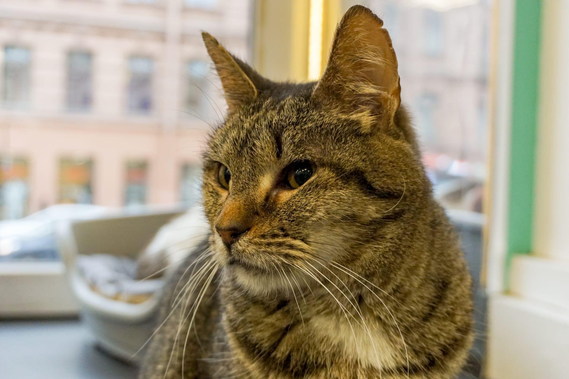 Кафе «Республика кошек» - Вконтакте