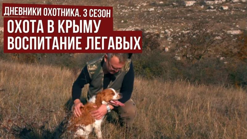 Охота в КРЫМУ с легавыми Воспитание ЛЕГАВЫХ Дневники охотник 3 5