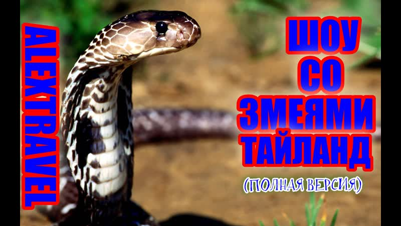 Шоу со змеями в Тайланде одно из самых популярных