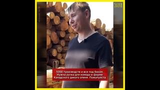 Почему российский лес идёт на экспорт?