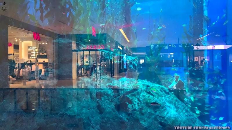 Путевые Заметки Дубаи сентябрь 2020 экскурсия по громадному Aquarium Dubai дополнение к 360 видео