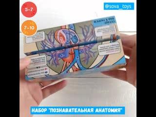Познавательная анатомия