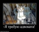 Персональный фотоальбом Сергея Пышкина
