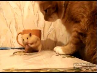 ...Жадный Хомяк и Кот...