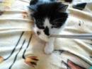моя кошка Мася))*