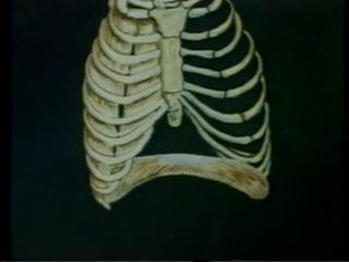 Анатомия и физиология человека 6. Дыхание