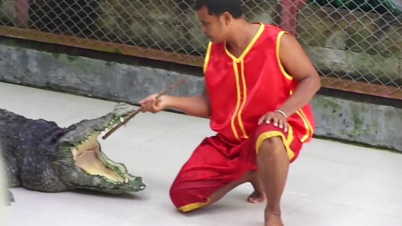 Крокодаил шоу