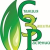 Семена овощных культур г.Санкт-Петербург