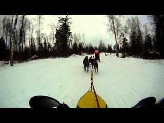Очень интересное бортовое видео четверки доберманов. Обгоны и падения.  Демино 2015 10 км