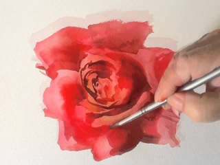 How to Paint a Red Rose in Watercolours by Trevor Waugh